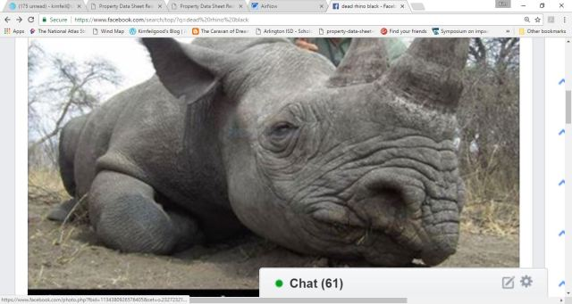 dead black rhino
